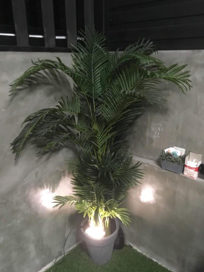 iSARAハウスの観葉植物