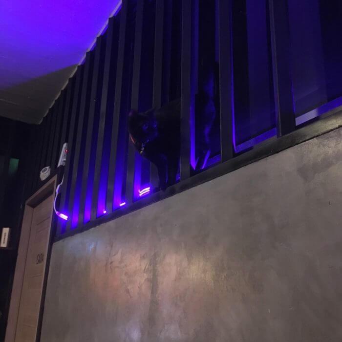 iSARAハウスの窓のライト
