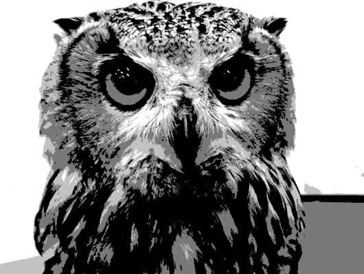 フクロウのポスタリゼーション画像